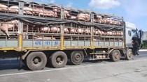 Bộ trưởng Nông Lâm Ngư nghiệp Campuchia kêu gọi các tỉnh giáp biên giới với Việt Nam hạn chế NK lợn