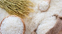 Giá lúa gạo hôm nay 31/5: Gạo nguyên liệu và thành phẩm xuất khẩu giảm