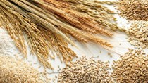 Giá lương thực thế giới tăng lên mức cao nhất trong gần 10 năm