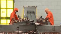 Hoa Kỳ ban hành Kết luận cuối cùng của đợt rà soát thuế CBPG đối với cá tra, basa NK từ Việt Nam