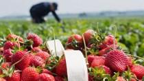 Thị trường rau quả tươi Bắc Âu