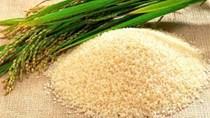 Giá lúa gạo hôm nay 30/8 ổn định