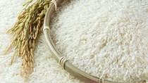 Giá lúa gạo hôm nay 15/9 ổn định