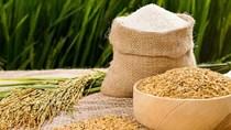 Giá lúa gạo hôm nay 21/9: Gạo nguyên liệu tăng nhẹ