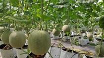 Đẩy mạnh hoạt động tiêu thụ nông sản Việt trực tuyến - Phục hồi kinh tế sau mùa dịch