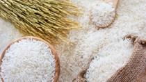 Giá lúa gạo hôm nay 27/10 ổn định