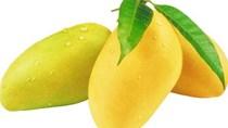 Australia sắp 'mở cửa' cho trái xoài Việt Nam