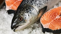 Dự báo giá cá hồi nuôi của Canada sẽ tăng