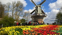 Kim ngạch xuất khẩu sang Hà Lan 7 tháng đầu năm 2016 tăng mạnh