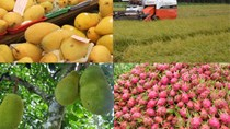 Hội chợ Fruit Attaction 2016 và tình hình XK rau quả sang Tây Ban Nha