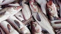 Nga dự kiến tăng xuất khẩu cá minh thái sang Hàn Quốc