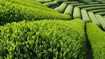 Năm 2016, ngành nông nghiệp vượt khó, nỗ lực thực hiện các nhiệm vụ đề ra