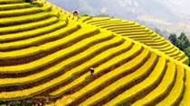 Việt Nam - Điểm đến hấp dẫn của thế giới