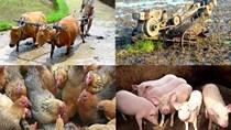Người chăn nuôi châu Á thận trọng sau khi Mỹ rút khỏi TPP