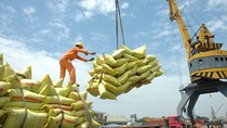 Thực hiện nhiều giải pháp tháo gỡ khó khăn thị trường xuất khẩu gạo