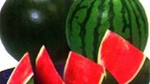 Đồng Tháp: Giá dưa hấu giảm, giá mít Thái siêu sớm tăng