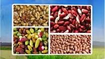Việt Nam cho nhập lại nhiều nông sản từ Ấn Độ nguy cơ nhiễm mọt