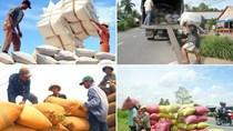 """Gạo Việt có """"hợp đồng khủng"""" 1 triệu tấn/năm"""