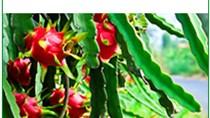 Giá rau củ xuất khẩu tuần 11 – 17/8/2017