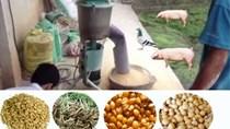 Giá thức ăn chăn nuôi nhập khẩu tuần 8-14/9/2017