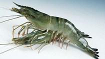Đề xuất giảm phí chứng nhận vật tư nuôi trồng thủy sản nhập khẩu