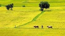 Nông nghiệp tăng trưởng nhưng không thể lơ là