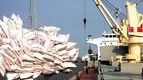 Thuận lợi về thị trường, xuất khẩu gạo tăng cao
