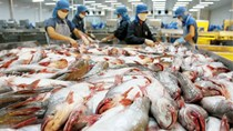 """Tổng cục Thủy sản: """"thẻ vàng"""" của EU chỉ áp dụng với sản phẩm khai thác trên biển"""