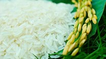 Giá gạo xuất khẩu  tuần 17 – 24/11/2017