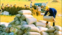 Giá gạo xuất khẩu tuần 19 – 25/1/2018