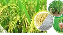 Giá gạo xuất khẩu tuần 26-31/1/2018