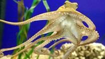 Năm 2017 xuất khẩu mực, bạch tuộc sang Italia tăng trưởng tốt