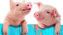 Giá lợn hơi tuần đến 8/4/2018 tăng tuần thứ 2 liên tiếp