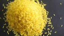Giá lúa gạo tại ĐBSCL lên cao kỷ lục, có loại tăng 250 – 300 đồng/kg