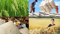 Giá gạo xuất khẩu tuần 18-24/5/2018