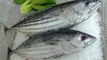 Kim ngạch xuất khẩu cá ngừ tăng tốc trong quý II