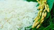 Giá gạo xuất khẩu tuần 20 -26/7/2018