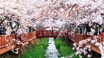 Nhập siêu từ Hàn Quốc 6 tháng đầu năm giảm 13,4% so với cùng kỳ