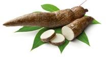 Xuất khẩu sắn 10 tháng đầu năm giảm mạnh