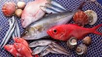 Thị trường cung cấp thủy sản cho Việt Nam 11 tháng đầu năm 2018