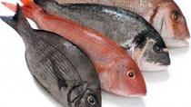 Chiến tranh thương mại Mỹ - Trung ảnh hưởng lớn đến ngành thủy sản