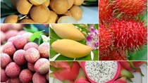 Xuất khẩu rau quả 11 tháng đầu năm tăng trưởng tốt