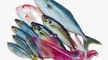 Thị trường xuất khẩu thủy sản 5 tháng đầu năm 2019