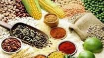 Nông sản xuất sang Trung Quốc sụt giảm đáng báo động
