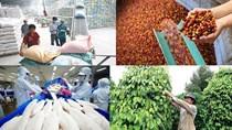 Tin chú ý 29/2: DN sắp hết nguyên liệu; Hỗ trợ DN, nông dân tháo gỡ khó khăn