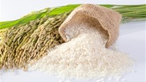 Xuất khẩu gạo năm 2020 dự báo sẽ là điểm sáng giữa đại dịch COVID-19