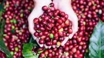 Xuất khẩu cà phê tăng về lượng và kim ngạch nhưng giá giảm