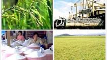 Giá lúa gạo ngày 24/6/2020 ổn định, xuất khẩu tăng trưởng tốt