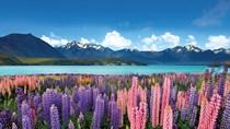 Nhập khẩu từ NewZealand, mặt hàng sữa chiếm gần 60% kim ngạch