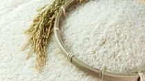 Giá gạo ngày 31/7/2020 tiếp tục tăng